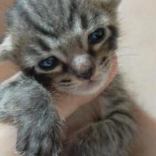 子猫と母猫の里親募集。 − 沖縄県