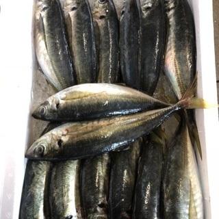 魚の運搬 仕分け 梱包等の簡単な仕事です。時給1000~