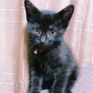 ジジ?ティブ?可愛い黒猫ちゃん