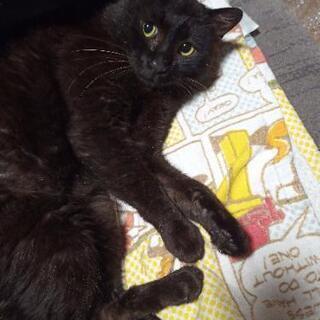 黒猫 オス おとなしい子です。
