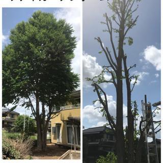 庭木の伐採 高木伐採致します【所沢市 狭山市入間市飯能市〜】