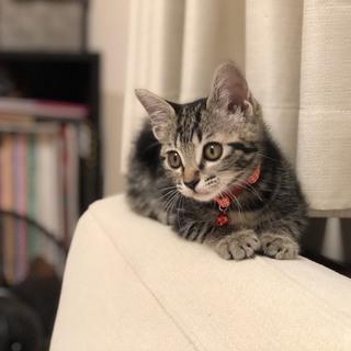 生後2ヶ月くらいのメスのネコちゃんです