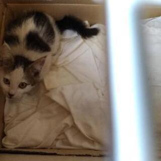 至急保護子猫6月末までの予定あと2匹