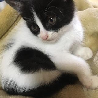推定1ヶ月の仔猫です!!