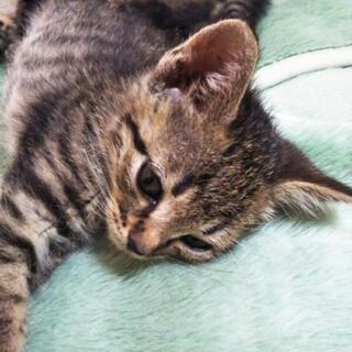野良猫の子猫5匹。その1 生後1ヶ月女の子