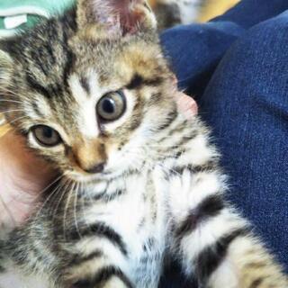 野良猫の子猫5匹 その3 生後1ヶ月の男の子