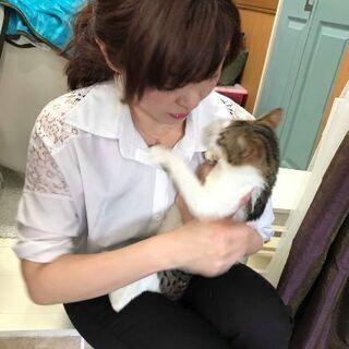 6月29日(土)の譲渡会に出します❤️琉球・奄美大島特集  継続中...