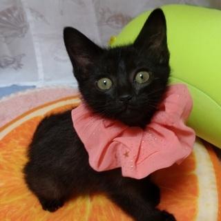 2ヶ月の黒猫の女の子
