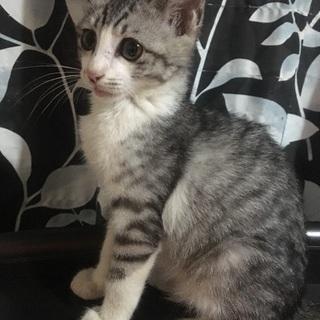 里親募集!!!!推定2~3ヶ月の仔猫