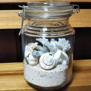 貝殻テラリウム//オーダーメイド品