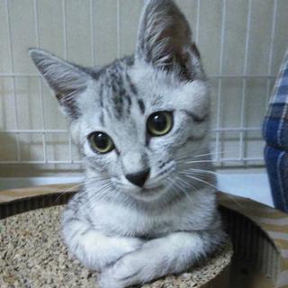 個性それぞれ2ヶ月子猫