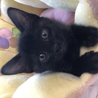 猫譲渡会(6月30日11時から)★子猫18匹参加します