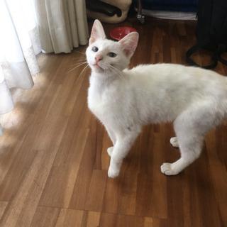 1歳くらいの地域猫(メス)