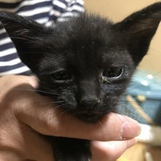 里親決定!元気いっぱいな子猫5匹を保護しました。