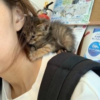 メスの子猫の里親を探してます - 猫