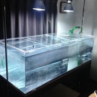 大型アクリル水槽飼育セット