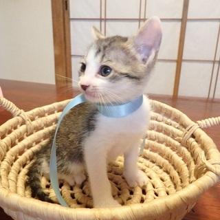 生後2か月の子猫(オス5匹、メス3匹)の里親募集>新規の募集を一...
