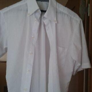 ボタンダウン 半袖シャツ