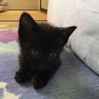 生後1ヶ月半の黒猫