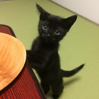 黒猫(♀)の里親募集