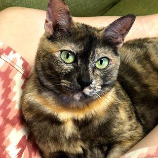 とっても人懐っこい可愛いらしいメス猫ちゃんです。里親様募集中@福岡