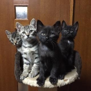 茶トラや黒系の子猫9匹の里親さん募集‼️