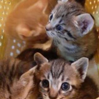 子猫と母猫の里親募集。 - 那覇市