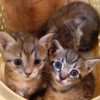 子猫と母猫の里親募集。
