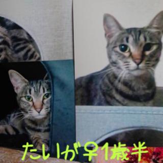 【避妊済 1歳半】3匹の猫の譲り手を探しています。