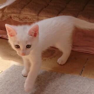 令和元年5月1日生まれの子猫の里親募集します!!