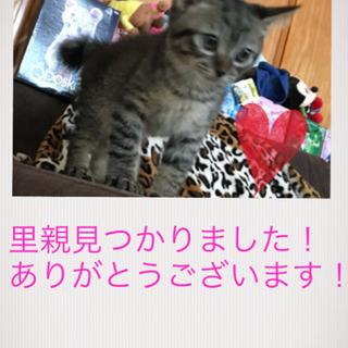 生後2ヶ月の子猫 − 沖縄県