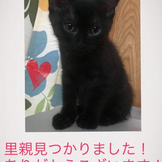 生後2ヶ月の子猫 - 里親募集
