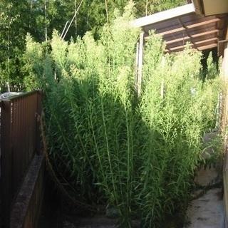 【無料で草刈りいたします】空き家のまま放置されたご実家をそのまま...