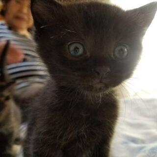 子猫の里親様募集(生後2ヶ月)