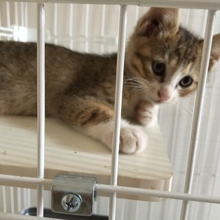生後2ヶ月 子猫