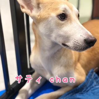 サティchan ⭐︎ 5カ月