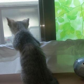2ヶ月♀のキジトラ - 猫