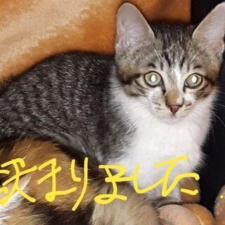 野良の母猫が連れてきた子猫たち(届出、確認済み)生後3ヶ月くらい