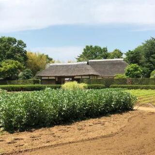 【受付中】家庭菜園、畑などを耕運機で耕します