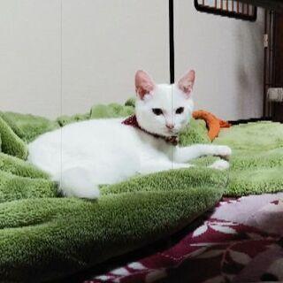 可愛い白猫ちゃん(4カ月)