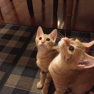 二匹の子猫の里親さん募集中 − 沖縄県
