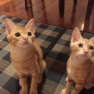 二匹の子猫の里親さん募集中