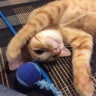 二匹の子猫の里親さん募集中 - 那覇市