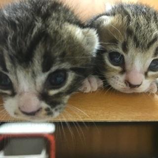 三匹の子猫の里親さん募集中