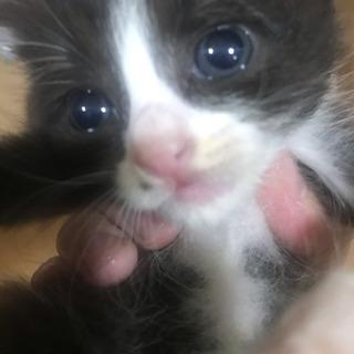 生後6週の子猫です。