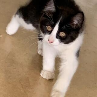 R1.9.10生まれの1か月の元気な4匹の兄弟子猫です。