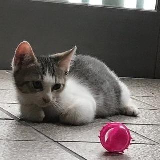 4ヶ月の仔猫です