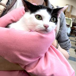 7月7日(日) 猫の譲渡会 名古屋市港区 社会福祉法人 中部盲導...