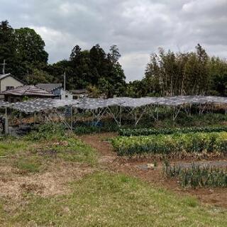 草刈りと除草剤散布作業