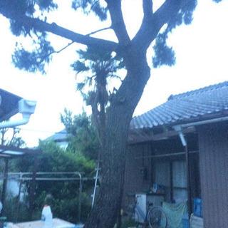 松の木を切断出来る方の画像